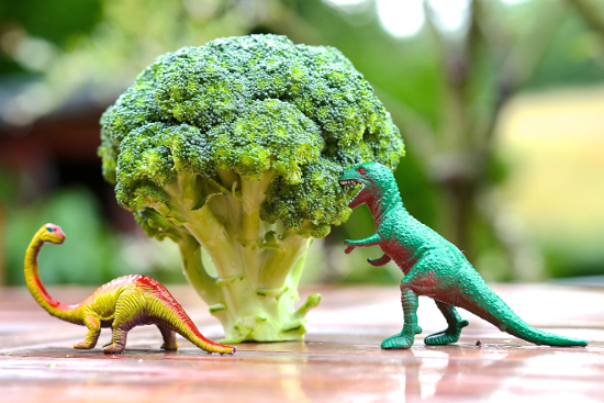 Dinosaur Broccoli Tree